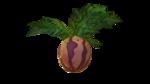 Planta melomármol